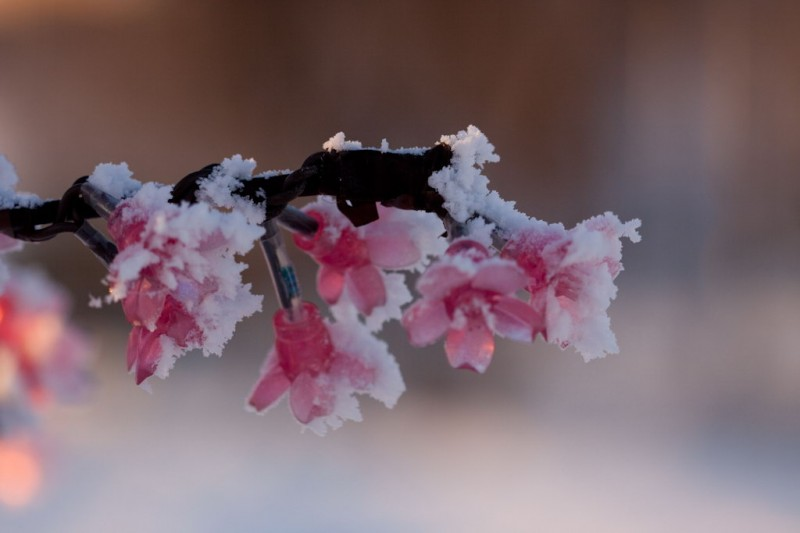 frozen plastic flowers