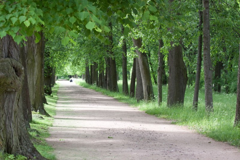 Avenue of park of the Aleksandrovsky palace